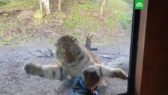 Посетитель зоопарка снял на видео нападение тигра на своего сына
