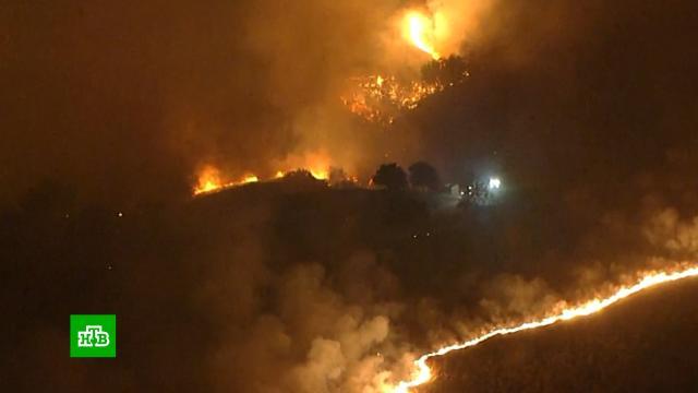 Огненный апокалипсис вКалифорнии: новые кадры.Красная книга, США, животные, лесные пожары, пожары.НТВ.Ru: новости, видео, программы телеканала НТВ
