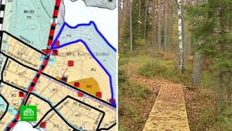 Жители поселка Колосково боятся застройки соснового леса рядом с озером