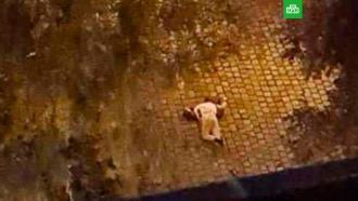 Полиция: один из террористов вВене ликвидирован