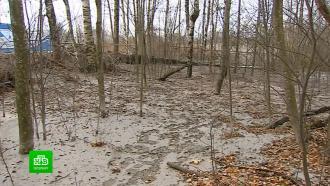 Забетонированный под Петербургом лес должны очистить к 10 ноября