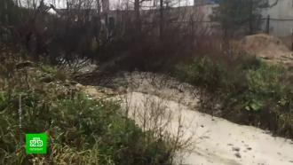Сотрудники завода в Ленобласти давно сливали бетон в лес