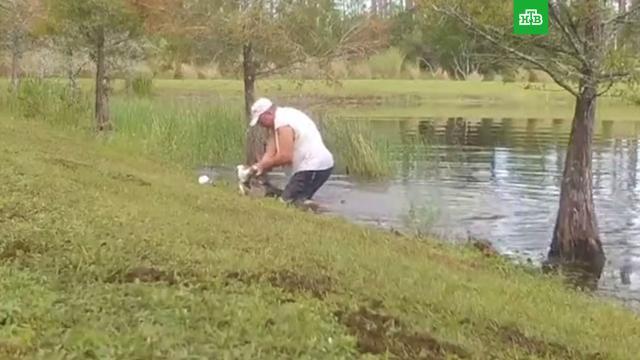 Американец голыми руками спас щенка из пасти крокодила.США, животные, крокодилы, собаки.НТВ.Ru: новости, видео, программы телеканала НТВ