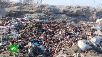 Невыносимое соседство: жители поселков под Калининградом добиваются закрытия скотомогильника