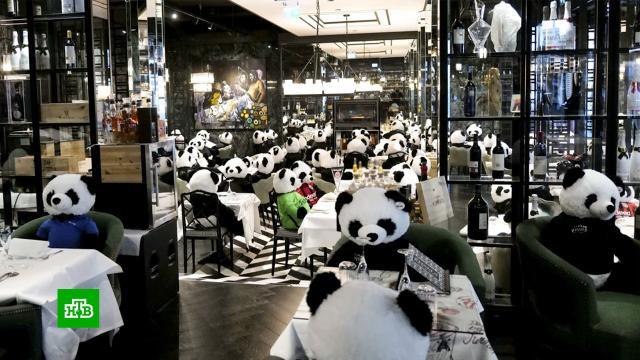 В Германии панды оккупировали ресторан на время карантина.экономика и бизнес, Германия, карантин, панды, рестораны и кафе.НТВ.Ru: новости, видео, программы телеканала НТВ