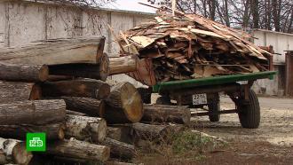 ВКурской области пресекли незаконную вырубку вековых дубов