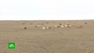 Пастбища на севере Дагестана превращаются впустыню