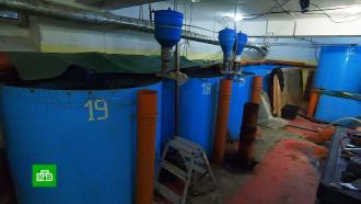 Нижегородцы воюют сустроившим рыбное хозяйство вподвале их дома бизнесменом
