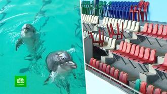 Петербургский дельфинарий закрыл свои двери ипопрощался сморскими артистами
