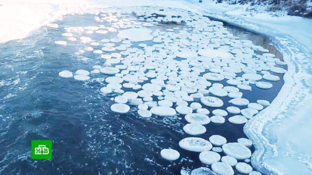 На Волге появились ледяные «блины» ицветы.Волга, Нижегородская область, зима, лед, реки и озера.НТВ.Ru: новости, видео, программы телеканала НТВ