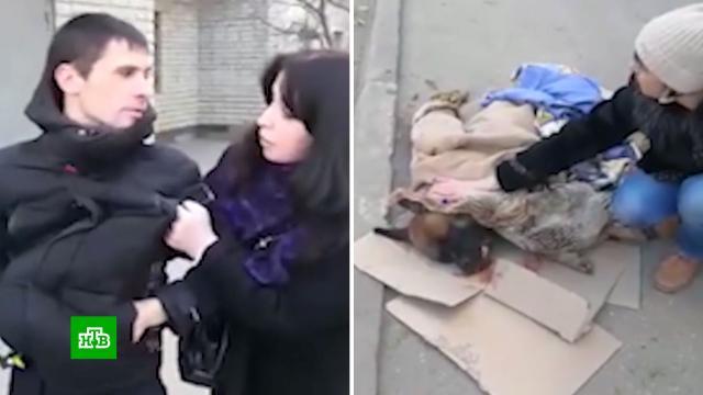 «Сидел за убийство двух бомжей»: соседка — о саратовце, выбросившем собаку в окно.Саратов, ветеринария, жестокость, животные, пьяные, расследование, собаки.НТВ.Ru: новости, видео, программы телеканала НТВ