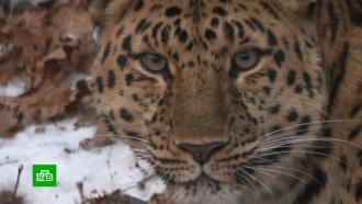Нацпарк «Земля леопарда» вПриморье привлекает все больше туристов во время пандемии