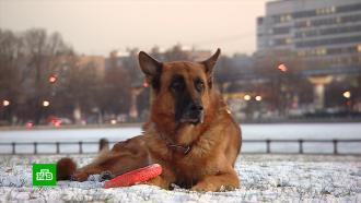 Большая премьера: на НТВ стартует новый сезон сериала «Пёс»