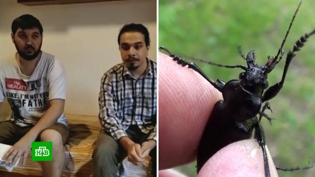Собиравшим жуков на Шри-Ланке россиянам предъявили обвинения по 301пункту.Шри-Ланка, насекомые, суды.НТВ.Ru: новости, видео, программы телеканала НТВ