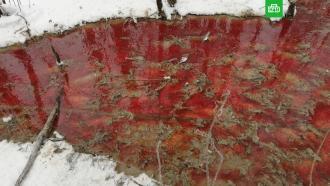 В Карелии река окрасилась кровью