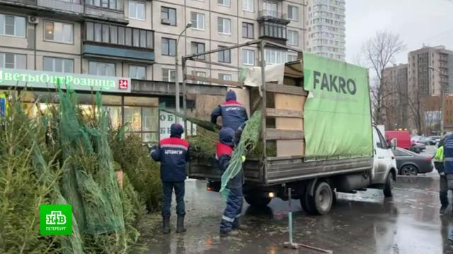 В Петербурге объявили охоту на нелегальные елочные базары.Новый год, Санкт-Петербург, торговля, торжества и праздники.НТВ.Ru: новости, видео, программы телеканала НТВ