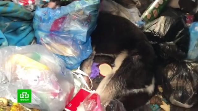 ВПетербурге будут судить живодера, до полусмерти избившего собаку.Санкт-Петербург, жестокость, животные, суды.НТВ.Ru: новости, видео, программы телеканала НТВ