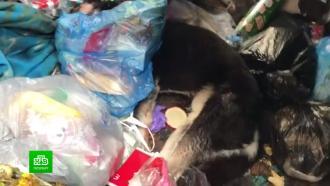 ВПетербурге будут судить живодера, до полусмерти избившего собаку