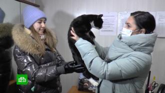 Чудо на сортировочном заводе: спасители кота регулярно находят вмусоре животных