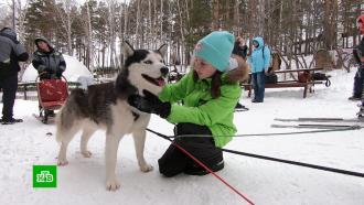 Красноярских школьников научат ездовому спорту