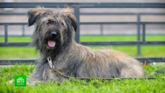 ВПетербурге <nobr>из-за</nobr> новогодних петард собаки чаще убегают от хозяев
