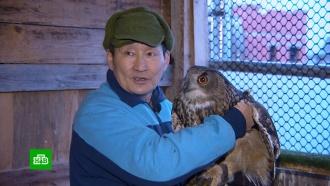 Полковник полиции вотставке разводит испасает хищных птиц