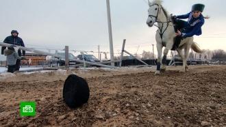 КСК «Донские кони» получил миллионы на ремонт иразвитие