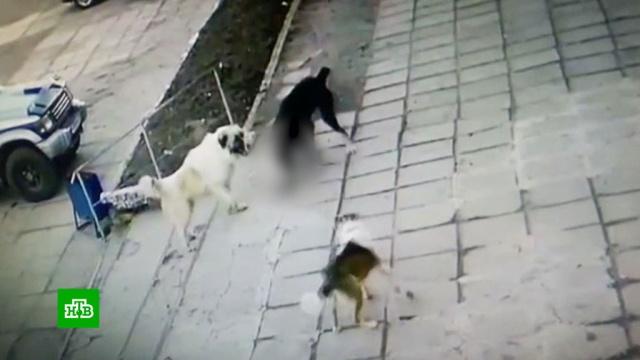 Владелец двух сторожевых псов— убийц избежал наказания.драки и избиения, животные, полиция, расследование, смерть, собаки, Хабаровск.НТВ.Ru: новости, видео, программы телеканала НТВ