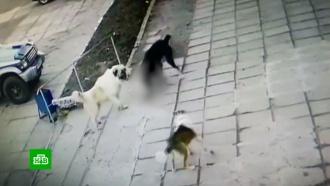 Владелец двух сторожевых псов— убийц избежал наказания