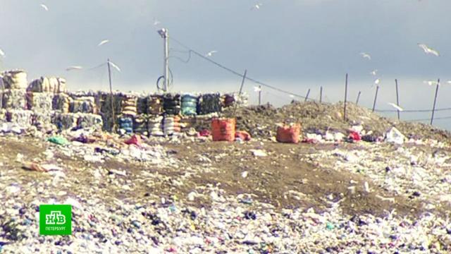 В Петербурге назвали основные ошибки мусорной реформы.Санкт-Петербург, мусор, экология.НТВ.Ru: новости, видео, программы телеканала НТВ