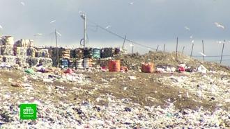 В Петербурге назвали основные ошибки мусорной реформы