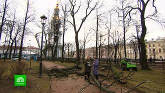 Голландская болезнь уничтожила вязы в Никольском саду Петербурга