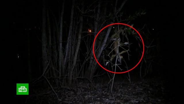 Жителей Флориды предупредили о падающих с деревьев игуанах.США, животные, зима, курьезы, погода.НТВ.Ru: новости, видео, программы телеканала НТВ
