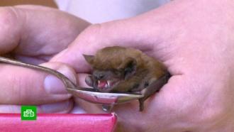 В Минске озаботились спасением неспящих летучих мышей