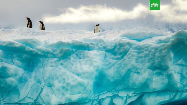 «Холодильник» Земли. Антарктида.Антарктика, ЗаМинуту, метеорит, снег.НТВ.Ru: новости, видео, программы телеканала НТВ