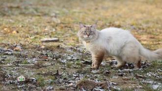 «Умные» гаджеты для домашних животных: на что они способны