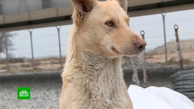 Собаки и щенки с Крымского моста ищут новых хозяев.Крым, животные, мосты, собаки, строительство.НТВ.Ru: новости, видео, программы телеканала НТВ