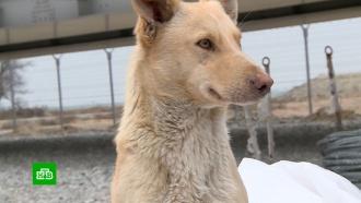 Собаки и щенки с Крымского моста ищут новых хозяев