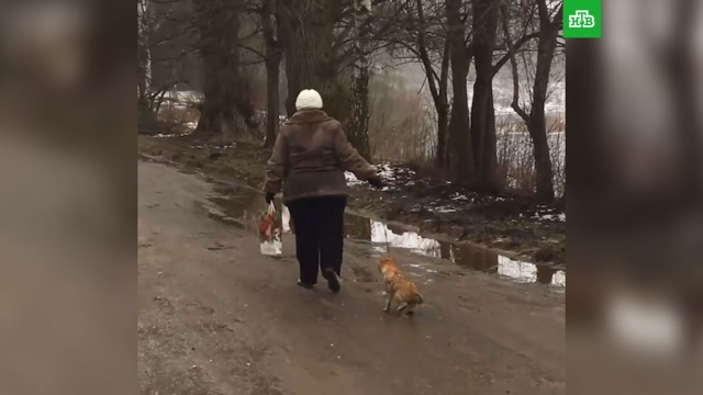 Женщина таскала кота на поводке по лужам.Новгородская область, жестокость, животные, издевательства, кошки, соцсети.НТВ.Ru: новости, видео, программы телеканала НТВ