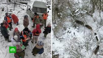Взаповеднике «Белогорье» туристов привлекли кпереписи диких зверей
