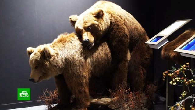 Активисты требуют закрыть «порнографическую» выставку с животными.Новосибирск, выставки и музеи, дети и подростки, животные, образование, скандалы.НТВ.Ru: новости, видео, программы телеканала НТВ