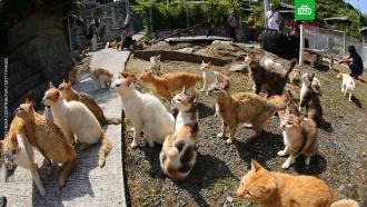 Кошачий рай вЯпонии