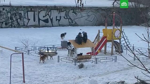 Стая собак напала на детей под Самарой.Самарская область, дети и подростки, собаки.НТВ.Ru: новости, видео, программы телеканала НТВ