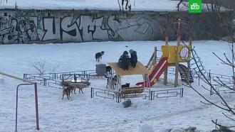 Стая собак напала на детей под Самарой