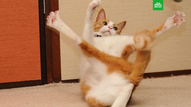 День кошек вРоссии.весна, ЗаМинуту, кошки.НТВ.Ru: новости, видео, программы телеканала НТВ