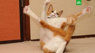 День кошек вРоссии