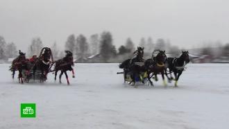 ВВологодской области состоялся первый этап чемпионата русских троек