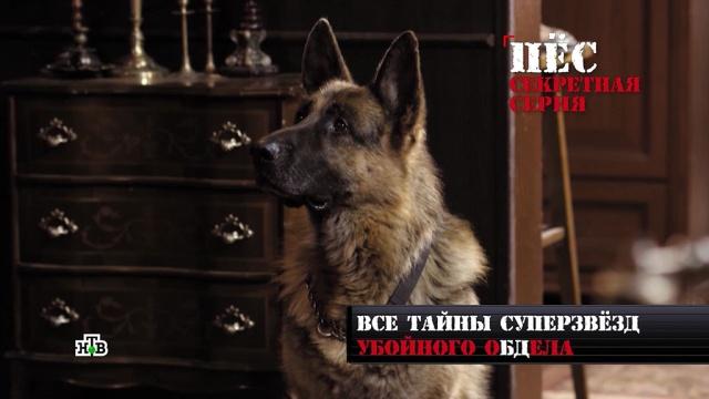 Главный пес страны: где живет Мухтар и сколько он зарабатывает?животные, сериалы, собаки, эксклюзив.НТВ.Ru: новости, видео, программы телеканала НТВ