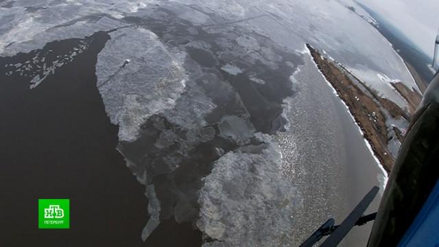 Тюленей вФинском заливе будут спасать зоологи на вертолете.Ленинградская область, Санкт-Петербург, Финский залив, животные.НТВ.Ru: новости, видео, программы телеканала НТВ