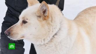 Клонирование помогло сохранить вымирающую породу собак